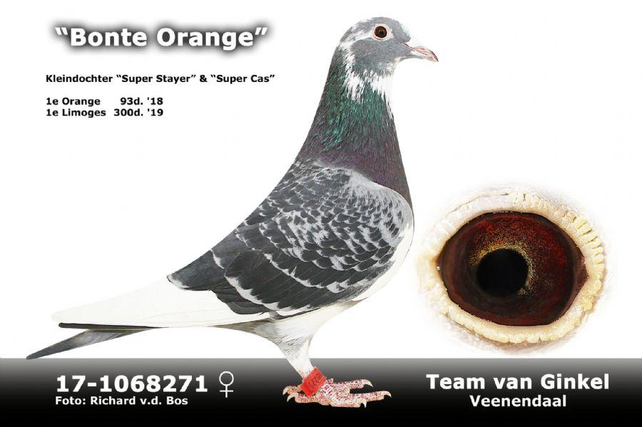 NL17-1068271