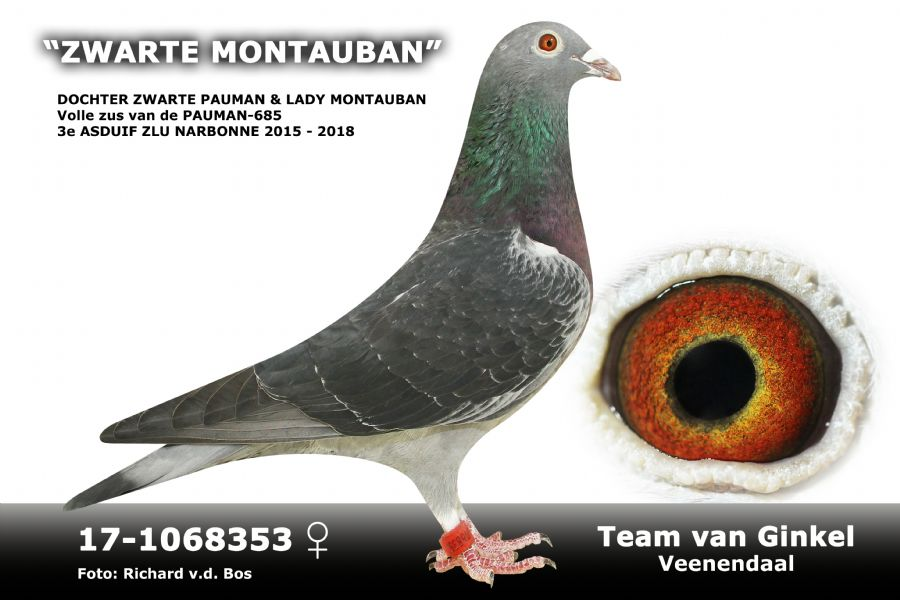 NL17-1068353