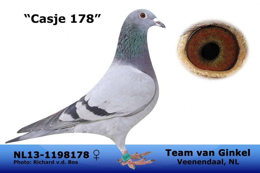 NL13-1198178