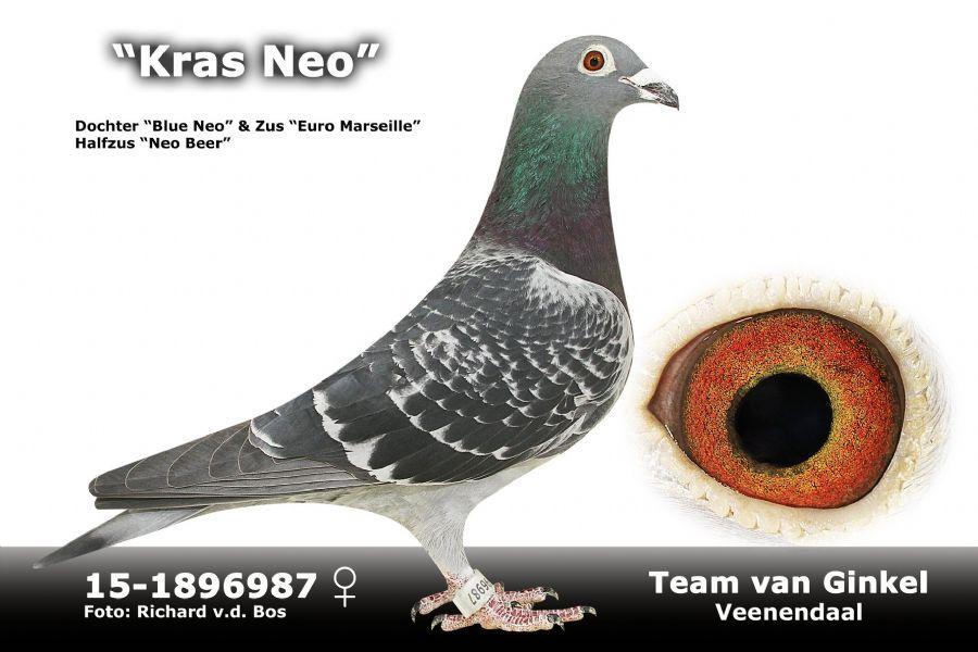NL15-1896987
