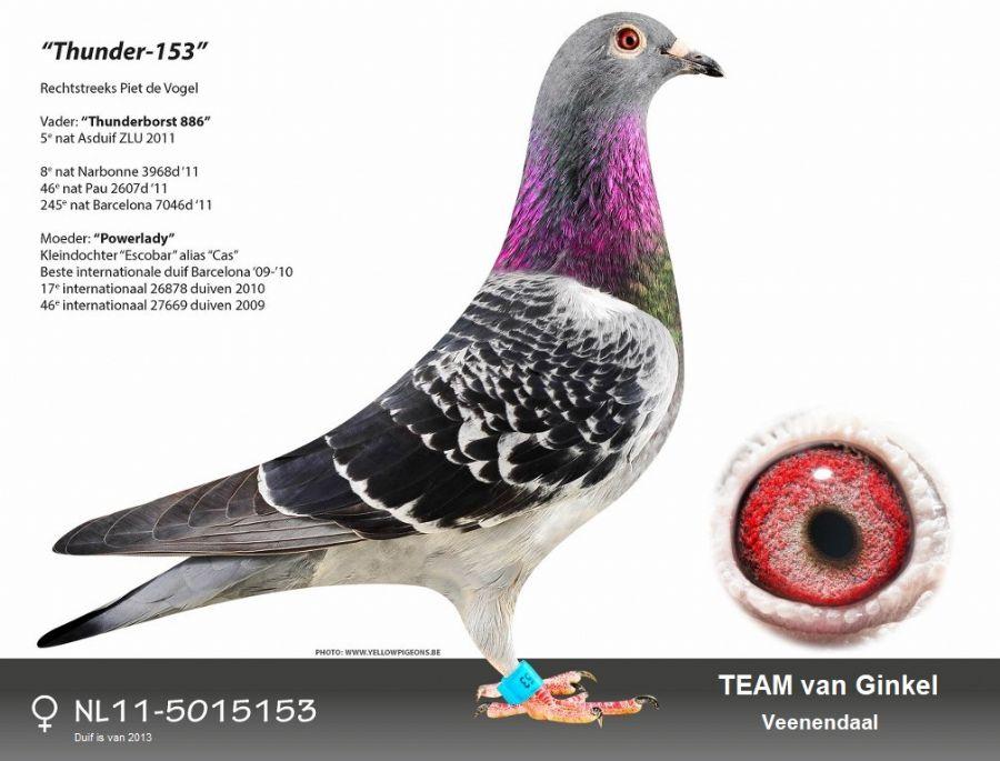 NL11-5015153